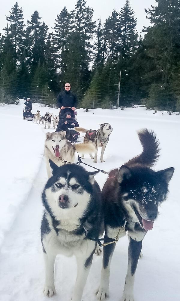 Pascal, Valérie, et les chiens
